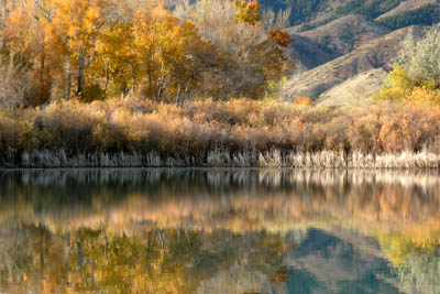 mirrored-autumn