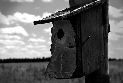 Bob's Bluebird House
