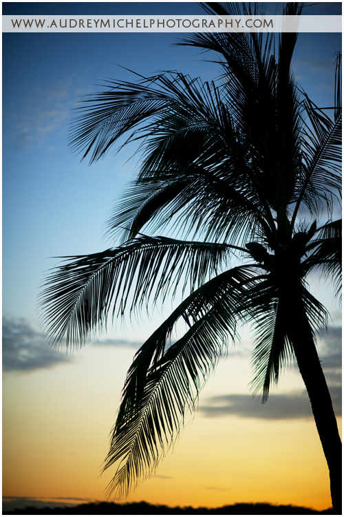 Denver Wedding Photographer, travel photography, beach, sunset, palm tree, paradise, Huatulco Mexico