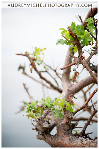 Denver Destination Wedding Photographer, AudreyMichel Photography, Huatulco