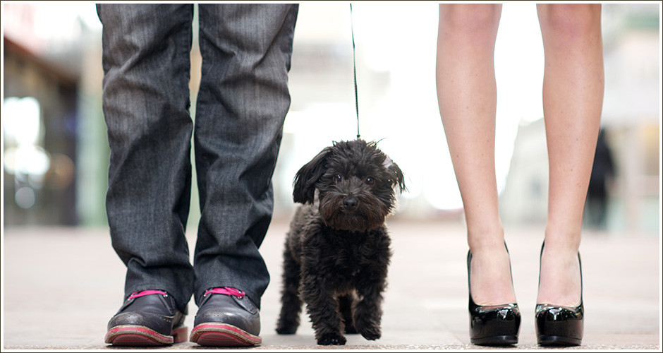 City-Engagement-Photography-Fabulous-Shoes-Puppy